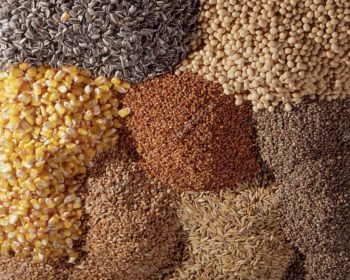depositphotos_102318730-stock-photo-seed-texture-and-various-grains